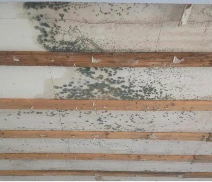 Mold Infestation Before