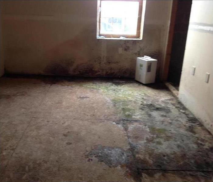 Mold Loss in Foreclosed Home