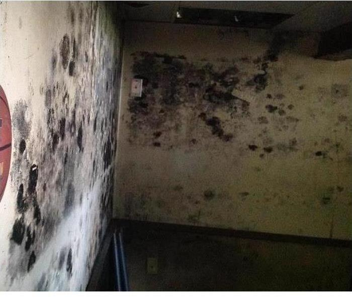 Mold Remediation Got Mold??